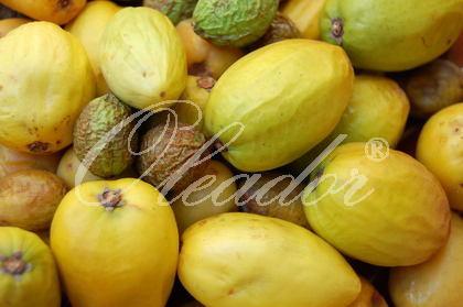 Arganbaum-Früchte