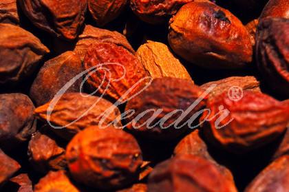 Getrocknete Arganfrüchte