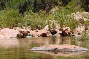 Arganbaum Biosphärenreservat