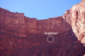 Arganier